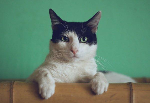 По словам артиста, кошки регулярно спасают своих хозяев, так как они сильно привязаны к человеку и очень ему благодарны