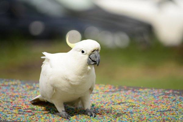 Для попугая принесли воду и белый хлеб