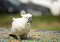 В Нидерландах попугая посадили в тюрьму
