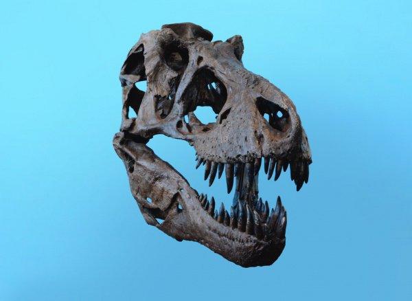 Тираннозавр кусал в 4 раза сильнее, чем самые сильные современные крокодилы