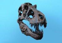 Стало известно, с какой силой кусал тираннозавр