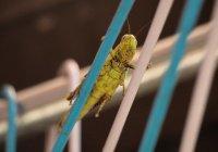 Ученые призывают людей есть насекомых