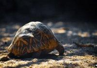 Умерла старейшая черепаха на планете