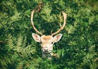 В США олень ворвался в салон красоты (ВИДЕО)