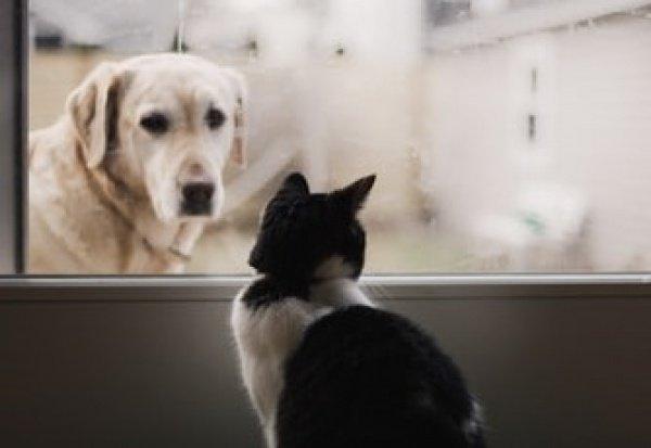 При этом с просьбой помочь попавшей в беду собаке с начала этого года поступило всего 44 звонка