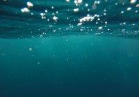 Подводные «фермы» разрабатываются в России