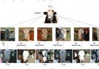 Здоровых телят без рогов получили от быка с исправленными генами
