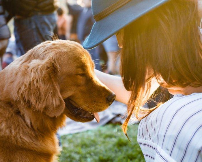 Было обнаружено, что наличие пса уменьшает риск гибели человека на 24%