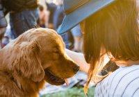 Наличие собаки снижает риск смерти человека