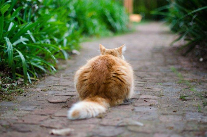 Остров знаменит тем, что на нем обитает больше кошек, чем людей