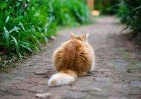 В Японии эвакуировали «кошачий остров» (ФОТО)