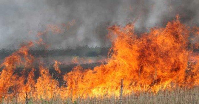 Власти Сирии и Ливана борются с лесными пожарами.