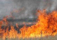 Сирию и Ливан охватили мощные лесные пожары
