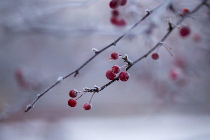 В Алтайском крае прогнозируется дождь, переходящий в мокрый снег