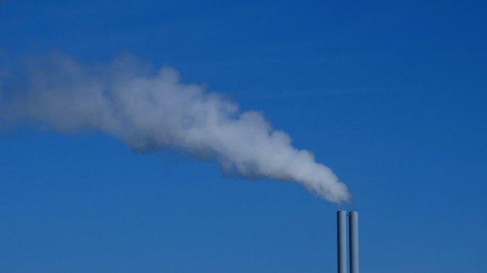 Совокупные выбросы парниковых газов сократились на 49% с учетом поглощения лесными экосистемами, или на 32% - без учета