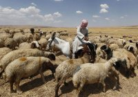 Саудовская Аравия займется сельским хозяйством Чечни