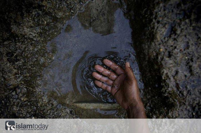 Египет столкнется с нехваткой воды уже в 2025 году. (Источник фото: animalworld.com.ua)