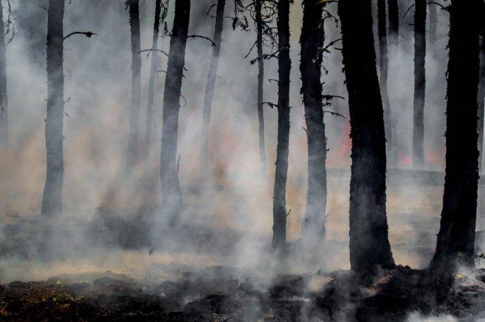 Площадь активного горения не превышает 25 гектаров