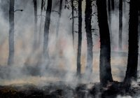 Шесть очагов природных пожаров продолжают действовать в России