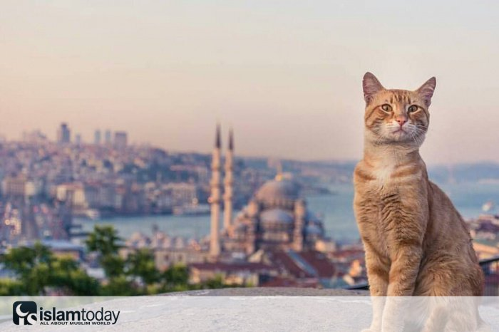 Кошки - короли турецких улиц. (Источник фото: pinterest.ru)