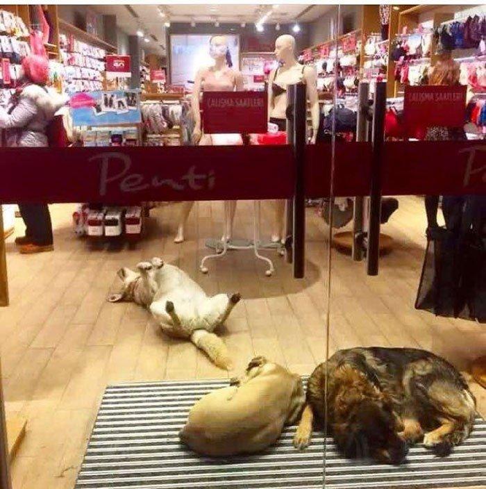 Кому в Турции жить хорошо: как животные ночуют в торговых центрах
