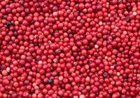 Ученые признали чай, клюкву и арахис ГМО-растениями
