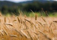 Россия и Ливия обсудят сотрудничество в сельском хозяйстве