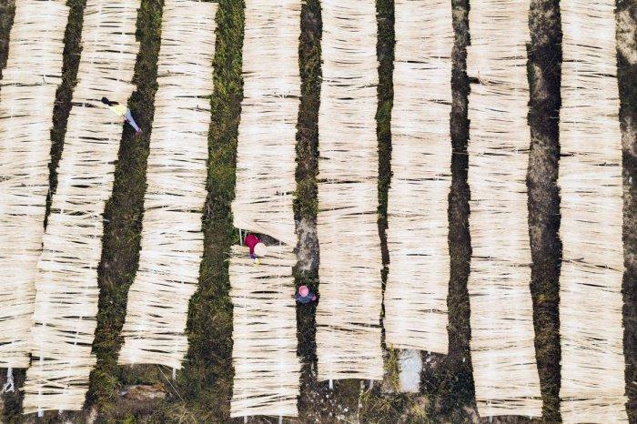 Вид сверху на жителя деревни сушащего бамбуковые палочки в китайской провинции Цзянси.