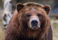 Стало известно, как выжить после встречи с медведем