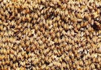 Ученые связали судьбу человечества с пчелами