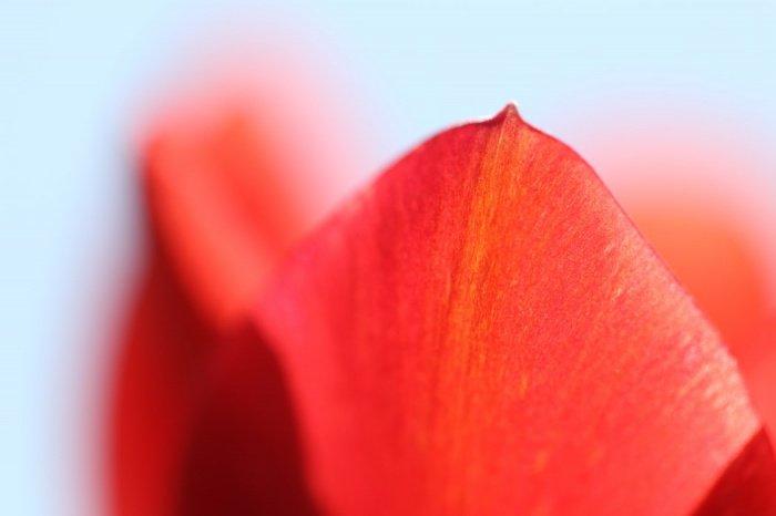 Полотно из живых цветов общей площадью 210 кв. м будет узорчатым: на нем будут запечатлены логотип фестиваля и силуэты ключевых достопримечательностей ОАЭ