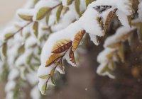 Специалист рассказал о погоде в России в ноябре