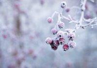 Гидрометцентр пообещал россиянам «розовую» зиму