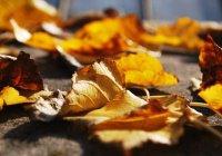 Врач предупредил об опасности аномального тепла в ноябре