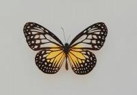В Швейцарии разработали микроскопического робота-бабочку