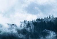 В России стало почти в 2 раза больше лесных пожаров от гроз