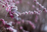 Метеоролог раскрыл последствия «вишневой зимы» для России