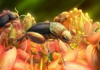 Обнаружен самый древний опылитель цветов