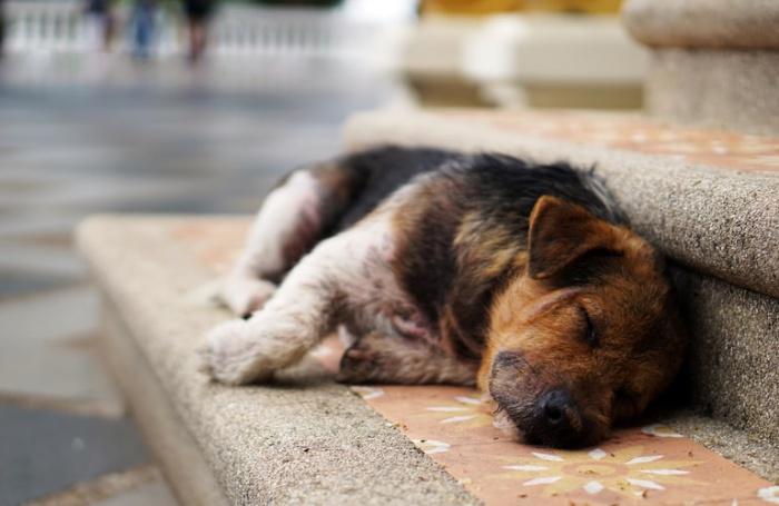 Авторы проекта уверены, что с ним волонтерам станет легче искать и находить помощь, и так они спасут больше беспризорных животных