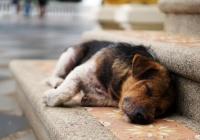 Социальная сеть для бездомных животных появилась в России