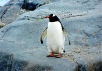 Гигантского пингвина обнаружили  в Новой Зеландии