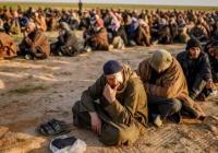 Германия и Голландия согласились забрать у Турции боевиков ИГИЛ