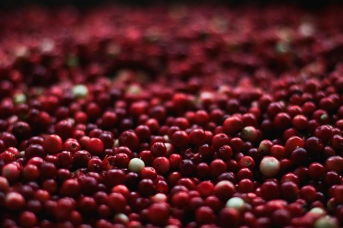 Аллергия на клюкву встречается крайне редко, однако всем, чей организм чувствителен к некоторым аллергенам, нужно быть бдительными при потреблении этой ягоды
