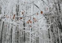 На Россию двинулись аномальные морозы