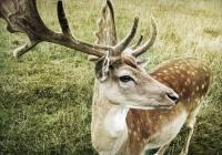 Ученые требуют защитить природу от человеческого шума