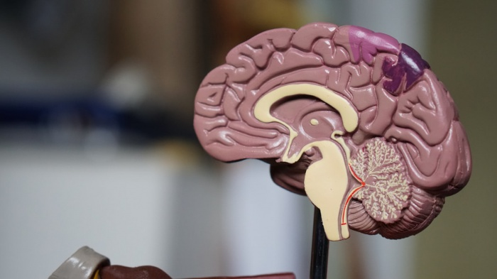 Рост числа связей между разными системами компенсирует потерю мозгового полушария и поддерживает когнитивные функции