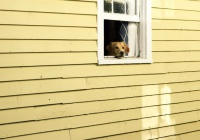 В России начнут маркировать домашних животных