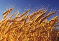 Катар хочет поставлять зерно из России