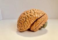 Выявлен напиток, препятствующий старению мозга