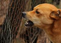 Стало известно, что делать при нападении собак